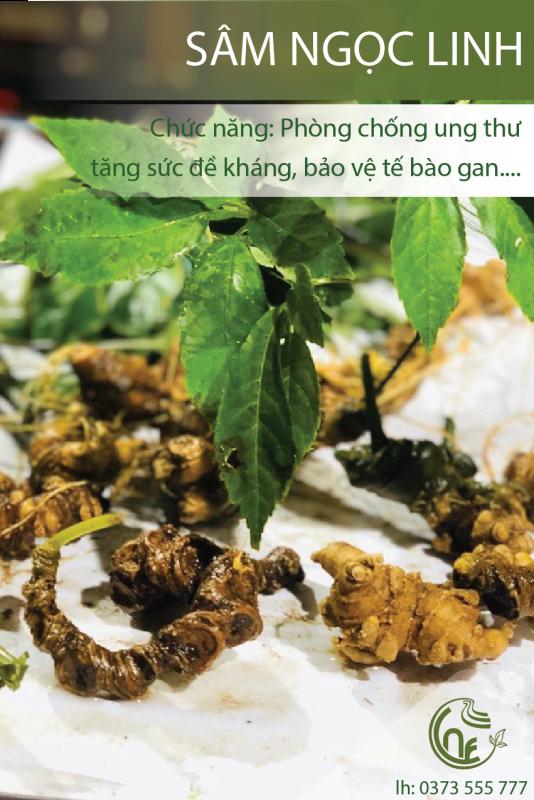 Sâm Ngọc Linh Cao Nguyên Food