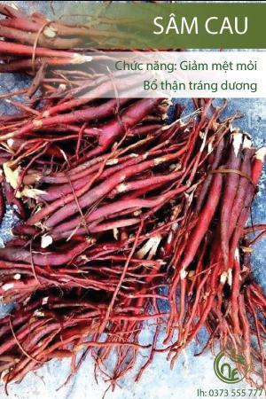 Sâm Cau Cao Nguyên Food