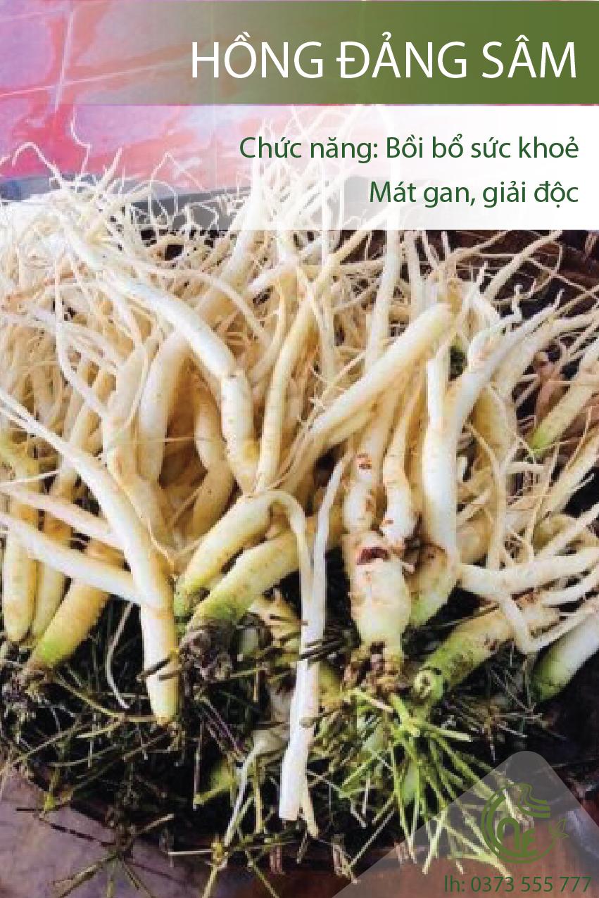 Hồng đảng sâm - Cao Nguyên Food - Món ngon & dược liệu quý từ Ngọc ...
