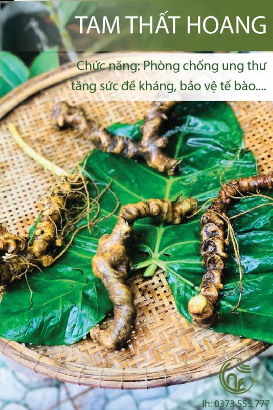 Tam Thất Hoang Cao Nguyên Food