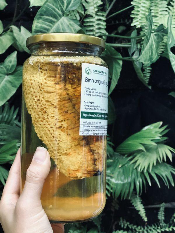 Mật Ong Ruồi Nguyên Tổ - Cao Nguyên Food